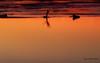 sunset (Flox Papa) Tags: toulouse france pont neuf saintpierre augustins