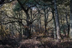 ltr-7134 (KazzT2012) Tags: autumn canoneos70d chilterns landscape november forest wood tree thechilterns