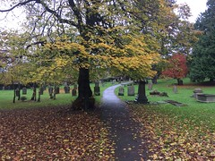 Autumn leaves. (Bennydorm) Tags: inglaterra inghilterra angleterre europe uk gb britain england cumbria furness ulverston iphone5s cemetery graveyard trees november hojas foglie blatter feuilles leaves atono autunno herbst automne autumn