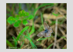 "Forget-me-not 2 • <a style=""font-size:0.8em;"" href=""http://www.flickr.com/photos/128992783@N05/38513996391/"" target=""_blank"">View on Flickr</a>"