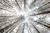 Nature (Bruno MATHIOT) Tags: forest forêt outdoor nature alsace france french wideangle sigma 1020 canon 760d arbre tree neige snow