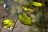 your stairway lies on the whispering wind (she, myself and eye) Tags: eechillington nikond7500 viewnxi bellscanyon hiking leaf song lyrics stairwaytoheaven impressionistic utah patterns