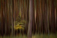 lonely (renatecamin) Tags: art autumn forest trees wald abstract