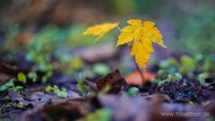 Herbst (Fotoalbom.de) Tags: test