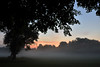 Through the morning mist  -  (Selected by GETTY IMAGES) (DESPITE STRAIGHT LINES) Tags: nikon d7200 nikond7200 nikkor1024mm nikon1024mm getty gettyimages gettyimagesesp despitestraightlinesatgettyimages paulwilliams paulwilliamsatgettyimages tree trees wood woods woodlands footscraymeadows kent bexley england uk tranquil tranquility serene serenity calm peace peaceful morning am firstlight light sunlight thegoldenhour goldenhour magichour themagichour mist misty morningmist mistysunrise forest silhouette sunrise sun ethereal