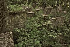 Old Jewish cementary (Grzesiek.) Tags: szczebrzeszyn jewish cementary cmentarzżydowski memorial