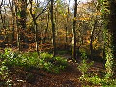 Sandy Heath - Hampstead Heath (Laura Nolte) Tags: hampstead heath hampsteadheath autumn london park england