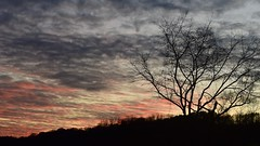 Thanksgiving Sunset (Explored) (R.A. Killmer) Tags: sunset color blue pink glow evening thanksgiving farm tree silhouette d750 nikon