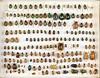 Unidentified Rutelinae box 4 (Biological Museum, Lund University: Entomology) Tags: coleoptera scarabaeidae rutelinae