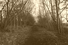 Trackbed near Green Lane,  Dodworth   (Silkstone - Wath old railway)    November 2017 (dave_attrill) Tags: dodworth great central railway electrified woodhead sheffield victoria manchester picadilly closed 1970 1955 stocksbridge engine transpennine upper don trail penistone wortley wadsley neepsend dunford thurgoland tunnel oxspring barnsley junction huddersfield allweather cycleway bridleway footpath remains silkstone 2016 1981 dove valley november 2017 dovevalleytrail worsbrough worsbroughbranch