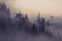 valley fog (clairescosmos) Tags: d5200 ireland wicklow forest trees fog mist valley cloud pines breath taking landscapes nikon atmosphere