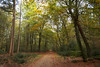 Lovely autumn colors (Jessie van Weert) Tags: wonderful wideangle warm wide wolken explore extreme extreem trees tree yellow dynamic mysterious dynamisch day uitzicht outdoor outside sun sunshine interesting impressive incredible nikon d3100 nice light field photography plant plants adorable atmosphere staatsbosbeheer sigma depthoffield depth dof flickr fotografie fabulous gorgeous green groothoek holland bijzonder landscape landschap licht zon view veld beautiful blue netherlands nature ngc natuur natuurgebied natuurmonumenten magical sky heide heath grass forest park autumn herfst bos wood