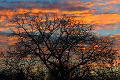 Strom / Tree (ZdenHer) Tags: tree sunset sky