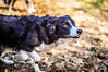 _DSC7402 (Ryan Ivy) Tags: cutter creek ranch wills point texas dogs border collies