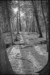 Sun sets through trees (nfocalypse) Tags: limehouseconservationarea fall nikonf100 trix ontario on canada hc110 f100 brucetrail