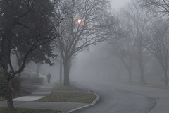 Foggy Streets (JD's Photography) Tags: toronto ontario canada donmills cassandrablvd decembermorning foggy mist moody desaturated residential urban streetphoto sony e6300 epz18105mmf4goss jdèphotography
