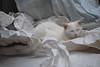 Polar bear on an ice floe (rootcrop54) Tags: batman white allwhite male paper package filler neko macska kedi 猫 kočka kissa γάτα köttur kucing gatto 고양이 kaķis katė katt katze katzen kot кошка mačka gatos maček kitteh chat ネコ explore ty6 cc1000 cc4000