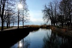The park of Morges (Carandoom) Tags: 2017 morges switzerland water reflection trees sun park eau ciel arbre lac parc paysage