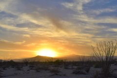 Sunset on the desert (thomasgorman1) Tags: sunset ocotillo landscape sundown dusk nikon scenic landscapes mexico baja cloudy clouds sky