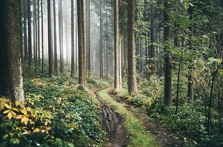 Familiar paths (explore)