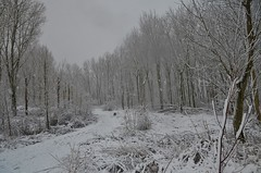 Sneeuw in de Vlaardingse Broekpolder (Hugo Sluimer) Tags: broekpolder sneeuw winter vlaardingen zuidholland nederland holland natuur nature natuurfotografie natuurfotograaf naturephotography