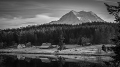 Sleepy Rapjohn (writing with light 2422 (Not Pro)) Tags: rapjohnlake mountrainier volcano stratovolcano washingtonstate sonya77 richborder landscape blackandwhite bw monochrome sleepyrapjohn ranch cows reflections