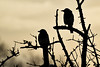 Silhouettes. (Cycling Saint) Tags: birds nikond750nikkor70300f456vr aylestonemeadows canalsideviews snow leicester