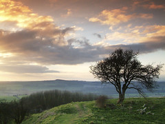 Old Winchester Hill (david.hogan7) Tags: south downs way old winchester hill iron age fort sunset tree earth works landscape moody