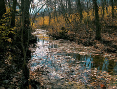 a stream in Kansas (Jayne Reed) Tags: streams creeks kansas water trees nature