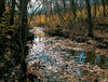 a stream in Kansas (Jayne Reed) Tags: streams creeks kansas water trees nature