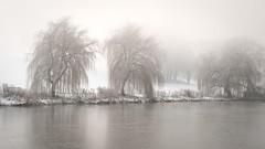 Wedgwood Pond