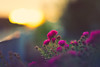 Space is only noise, if you can see (der_peste (on/off)) Tags: bokeh dof blur shallowdepthoffield depthoffield fence hff fencefriday fencedfriday happyfencedfriday flowers colors sun sunlight