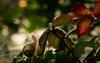 I've seen things you people wouldn't believe... (Bai R.) Tags: snail garden adventures gardenadventures green runner quote light bokeh nikkor105mmf28gvrmicro funny dof nikkon d750 nikkor eyes bladerunner