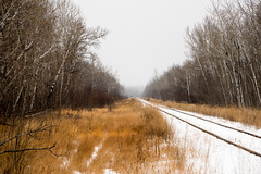 Lines (solalta) Tags: grass trees rail winter forest interlake fog manitoba railway snow matlock canada ca