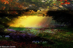 A New Adventure (M C Smith) Tags: sunlight yellow police box tardis green purple red shadows forest surreal pond branches rock reflections dark mysterious droplets