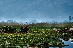 EmptyName 53 (LHansos) Tags: india kashmir srinagar sony alpha dal lake women boat