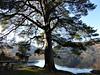 "Stirlingshire - Rowardennan (Loch Lomond) - ""By Yon Bonnie Banks . . ."". (bellrockman2011) Tags: lochlomond benlomond munro rowardennan balmaha youthhostelling syha tarbet ardlui stirlingshire climbing sailing"