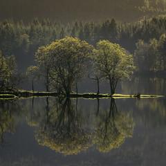 Loch Ard trees. (iancook95) Tags: