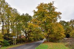 Brampton Road (John A King) Tags: autumn colour brampton road bostal heath
