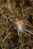 8566 (JerrysPhotographs) Tags: oklahoma places seedpods