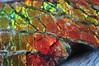Ammolite -2 detail (Archangem) Tags: mineral minéraux geologie geology gem gemstone stone rock crystal cristal cristallographie specimen pierre précieuse gemme gemmologie minerai ammolite canada ammonite
