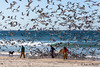 Feeding time... (JOAO DE BARROS) Tags: barros joão nature seagull people beach