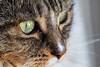 cat (roman_mktn) Tags: carl zeiss sonnar t 85mm f28