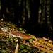 Day 11 - Lonely Mushroom