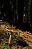 Day 11 - Lonely Mushroom (HimynameisPaolo) Tags: passo nigra niger nigerpass italy italia trentino alto adige europa europe nikon d7000 day11 earth terra world wildlife wild worldwide mondo explore exploring exploration explorations esplorare summer estate 2017 travel travelling viaggiare life wood woods foresta focus bosco boschi colors colori colours colore color colour lights shadows ombre luci lucieombre mushrooms mushroom funghi fungo fungus minimalism minimalismo minimalistic minimalistica macro nature natura naturale natural naturelover