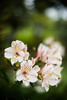 Flowers_FAV1047 (fotosclasicas) Tags: astromelia flowers nature closeup garden