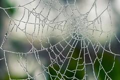 Frozen (michel1276) Tags: spiderweb web frozen ice cold spinnennetz gefroren foggy fog nebel