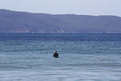 Waiting for the calm (Keith Midson) Tags: surfer surf surfing cliftonbeach water tasmania