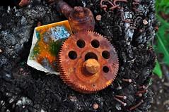 Debris, found rusty bits (holly hop) Tags: starnaud decay derelict rusty rustyandcrusty abandoned empty house home debris rust redrust stilllife cog wheel green greenrust australia ruraldecay farm