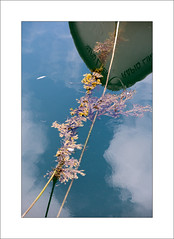 Boats and Ropes - i (Steve-T201) Tags: boat rope harbour sea patterns colours falmouth cornwall